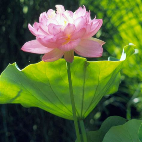 die besten pflanzenarten fuer den wassergarten und gartenteich