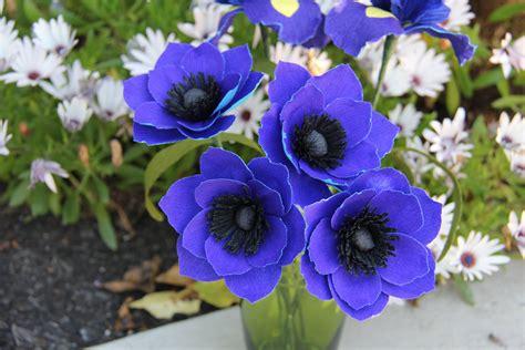 beautiful anemone flower weneedfun