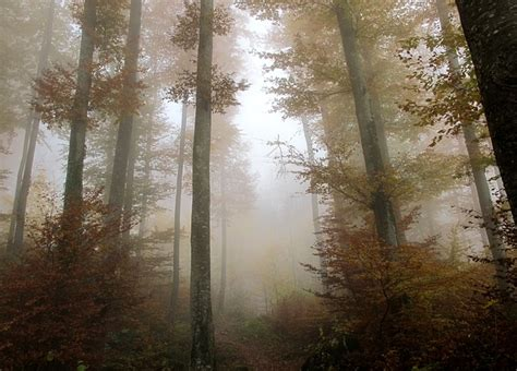 photo forest autumn leaves trees mood