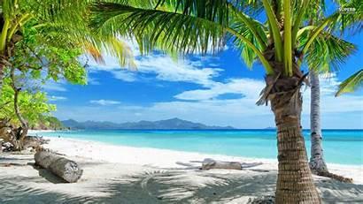 Tropical Playa Palmeras Desktop Wallpapers Backgrounds