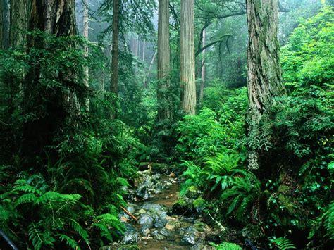 Rainforest Animals Wallpaper - rainforest wallpapers wallpaper cave