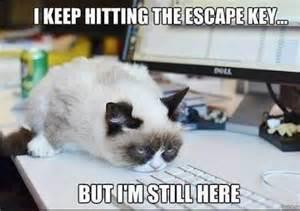 cat jokes for cat jokes pictures jokes4laugh