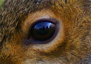 Zoology - What Shape Is The Pupil Of Squirrels