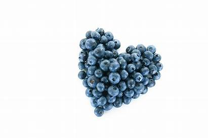 Blueberries Special Blueberry Whitworth Ashley Fotolia Newswise