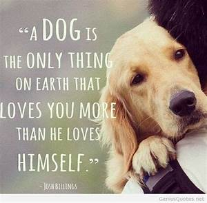 Sad Dog Quotes Tumblr – Quotesta