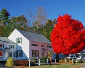 these top maple varieties provide the fall color you need fast growing trees