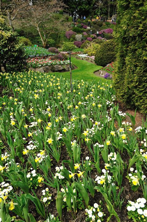 spring garden stock image image  canadian floral