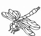 Insect Drawing Realistic Coloring Pages Mosquito Clipartmag sketch template