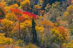 Free Images : tree, wilderness, meadow, prairie, leaf ...