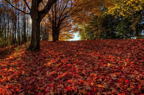 Ohio Fall Scenery Photograph By David Dufresne