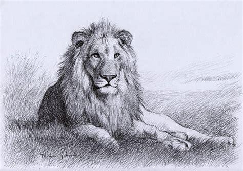 lion drawings jpg