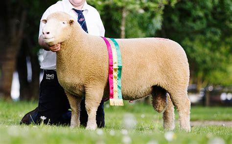 The Dorset Horn Sheep Breeders' Association