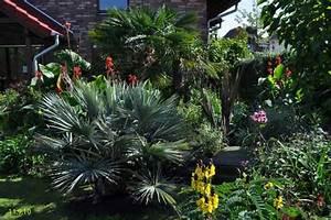 Palmen Für Den Garten : exoten und palmen claus willich ~ Sanjose-hotels-ca.com Haus und Dekorationen