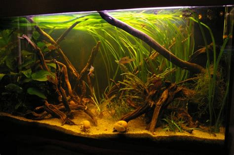 la filtration sur tourbe dans un aquarium d eau douce int 233 r 234 t et utilisation animogen