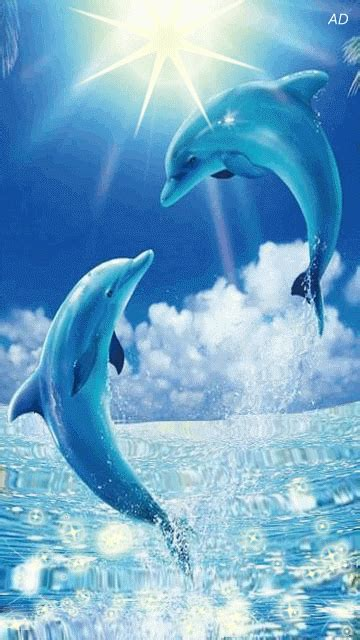 Dolphin Animated Wallpaper - free animated dolphins mobile wallpaper by paula on