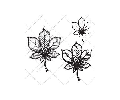 sketch leaf vector pack drawing leaf vectors tree leafs