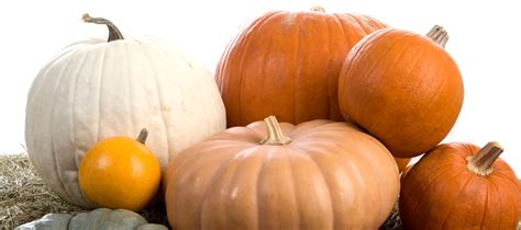 what to make with pumpkin retail blog small business marketing ideas tips bags bows 13 pumpkin decorating ideas
