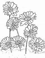 Daisy Coloring Flower Planting Scout Printable Getdrawings Getcolorings sketch template