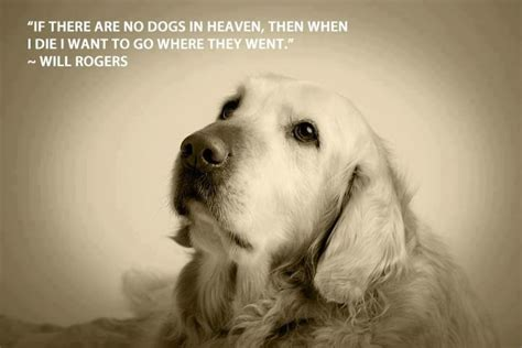 rogers quote  dogs quotes pinterest