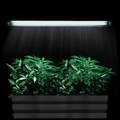 growing plants with fluorescent lights 2ft t5 grow light hydroponic 24 quot fluorescent tube veg bloom l kit 2 4 6 8 opt ebay