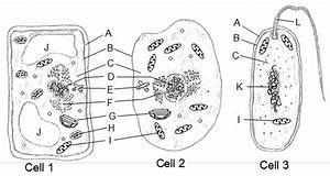 Integrated Science - Cells  U0026 Organelles