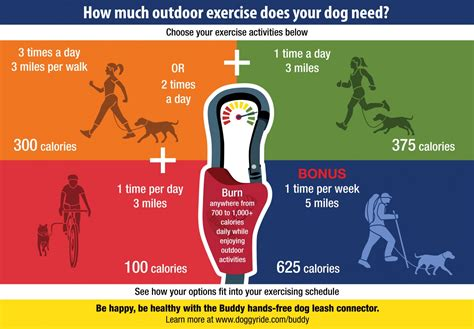 How Much Outdoor Exercise Does Your Dog Need?  Visually. Shibaura Institute Of Technology. Luxury Italian Villa Rentals. Disability Insurance Utah Pay With Visa Card. Php Uploading Multiple Files. Cheapeast Car Insurance Dr Cohen Chiropractor. Steps To Becoming A Veterinarian. Corporate Credit Check Medicare Rehab Centers. Allen University Columbia Sc
