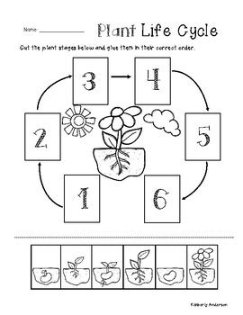 plant life cycle cut paste worksheet by beached bum