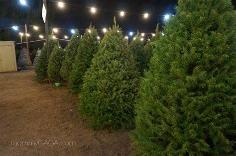 christmas trees at family christmas tree farm san diego