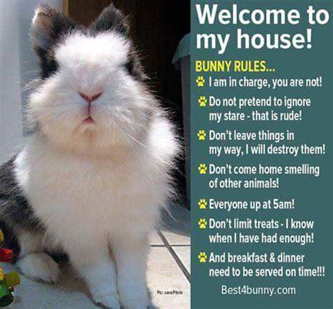 Bunny Meme - rabbit ramblings funny bunny monday meme day