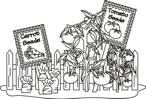 vegetable garden coloring pages food garden coloring