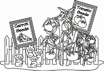 Vegetable Coloring Garden Pages Gardens Vegetables Printable
