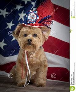 Patriotic Yorkie Dog With Hat And Flag Background, Red ...