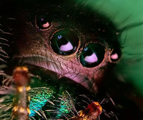 amazing visual art  macro photography close ups