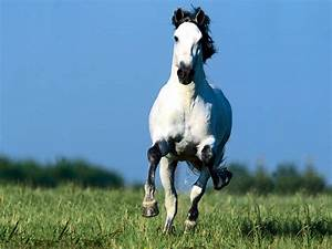Are you gainfully employed?: Galloping horse test...
