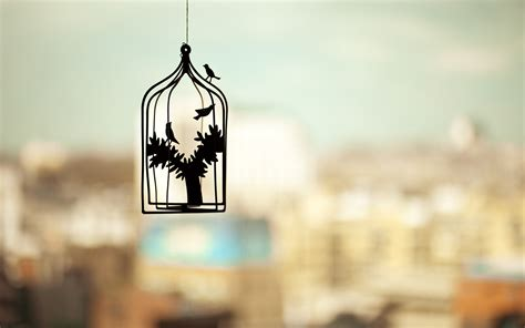 photography silhouette cages birds trees depth  field