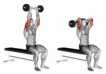Bar Tricep Curl Extension French Muscle Muscles