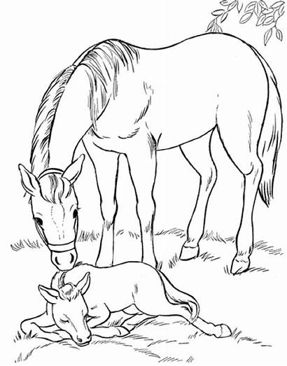 Coloring Foal Mare Horse Advertisement