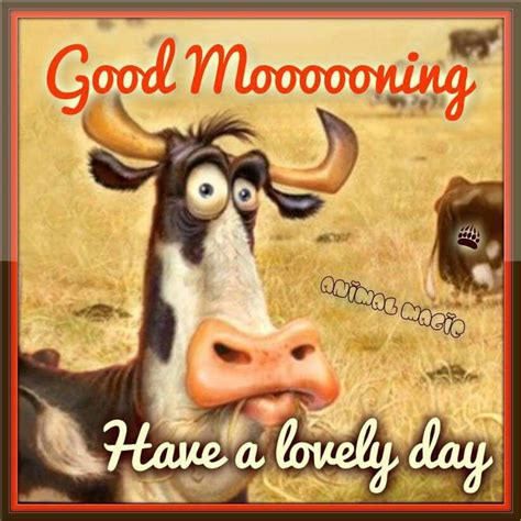 good mooooorning pictures   images  facebook
