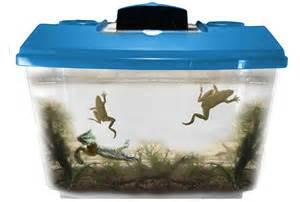 african dwarf frogs aquarium african dwarf frogs as pets