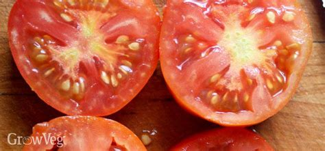 how to seed a tomato blight resistant tomato varieties worth growing