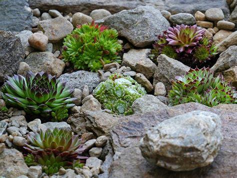 Mit Etwas How Steingarten Anlegen by Eigener Steingarten Ein Absoluter Hingucker Im Garten