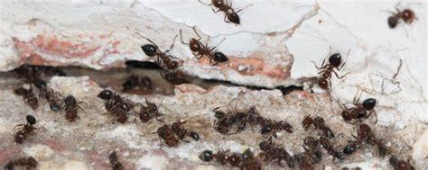 savannah ga pest control company savannah termite