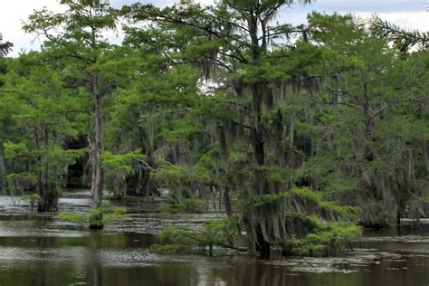 Caddo Lake Boat Rental by 5 Places To Go Kayaking In This Summer