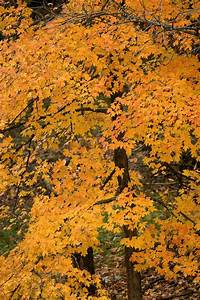 Fall Colors | MDC Discover Nature  Fall