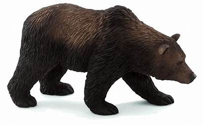 Bear Grizzly Animal Transparent Planet Brown Background
