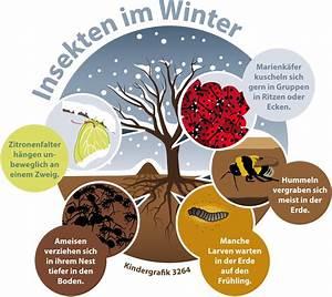 Ameisen Im Winter : wie berstehen insekten den winter ~ A.2002-acura-tl-radio.info Haus und Dekorationen