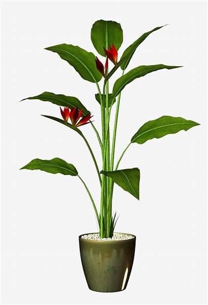 Pot Flower Plant Background Potted Clipart Transparent