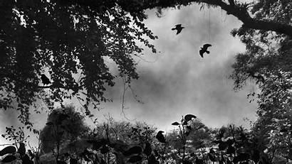 Ravens Rest Where 1080p Animals Birds Persona