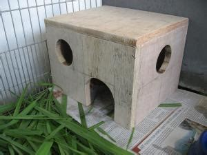 guinea pig care advice feeding guinea pigs walkerville vet