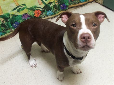 """Shelter Dogs of Portland: """"BANDIT"""" soft and adorable ..."""